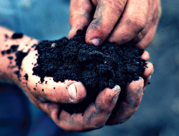 tips for healthy soil