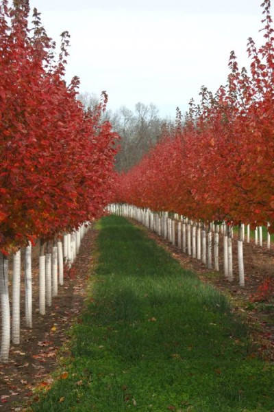 Kansas City Home and Garden | Trees